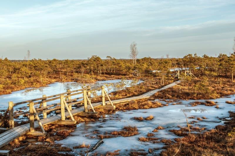 Природа Латвии, большего болота Kemeri: Панорамный ландшафт осени с деревянным путем над болотом на заходе солнца Предпосылка при стоковые фотографии rf