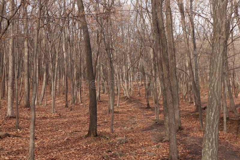 Природа леса осени стоковое изображение