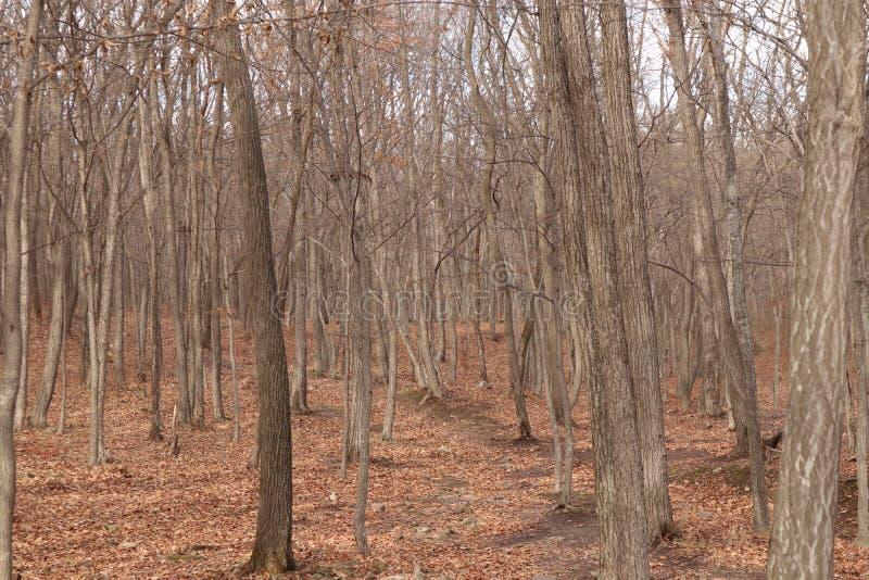 Природа леса осени стоковая фотография