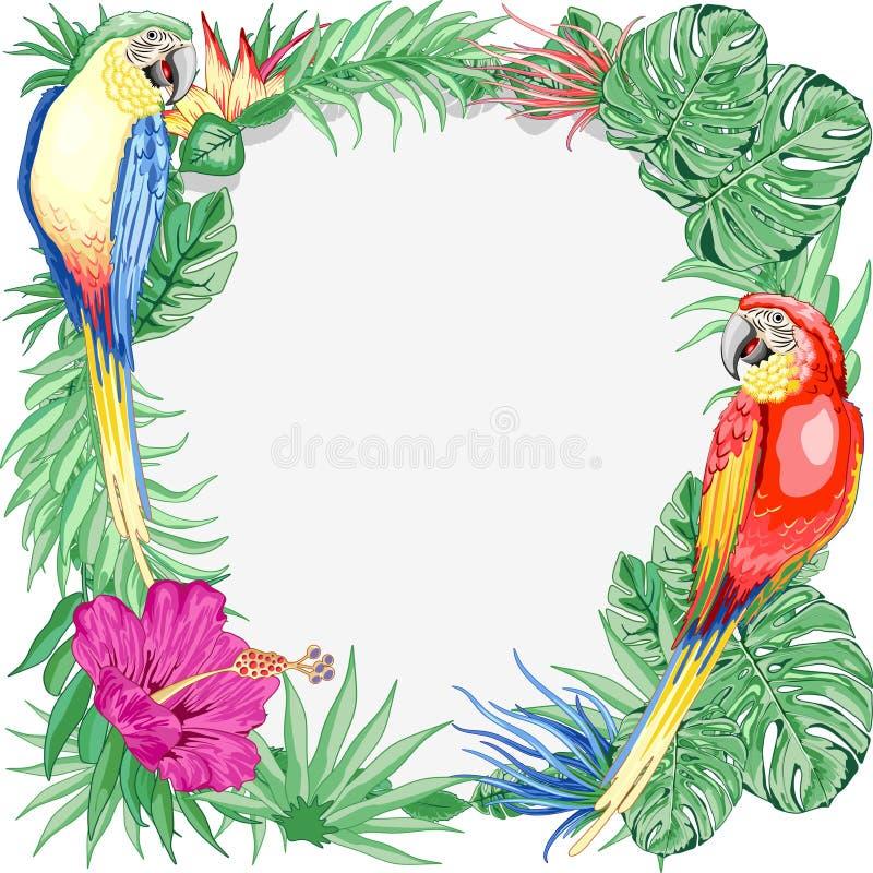 Природа лета птиц попугаев ар экзотическая вокруг искусства векторной графики рамки иллюстрация вектора