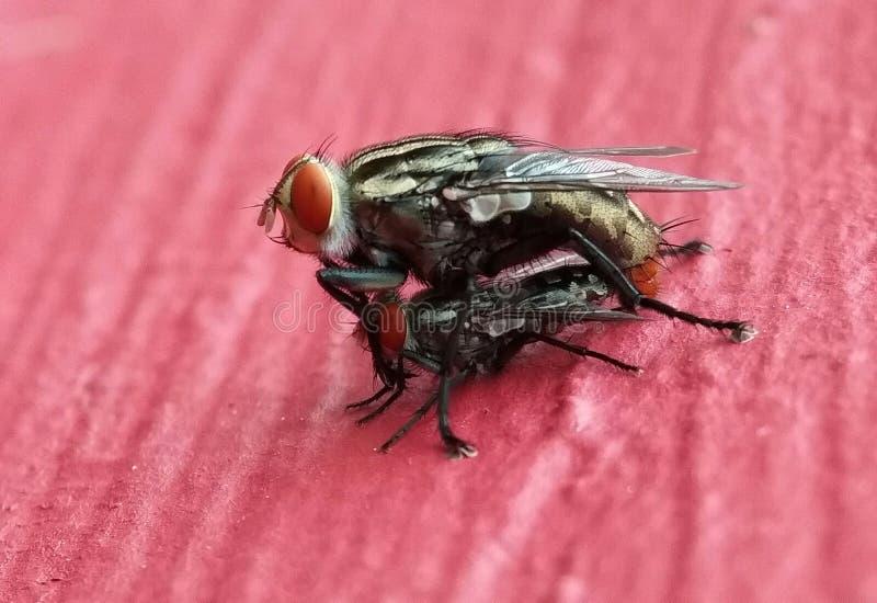 Природа мух стоковое изображение rf