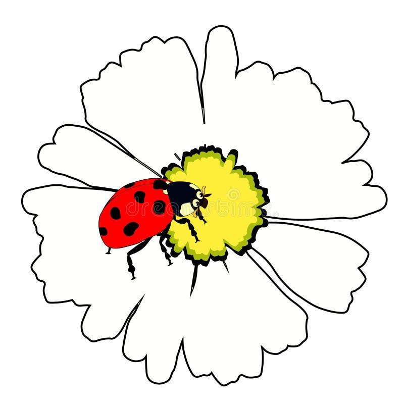 Природа насекомого ladybug на цветке маргаритки Вектор Illustratio бесплатная иллюстрация