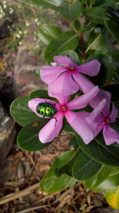 Природа, насекомое, цветок стоковые изображения