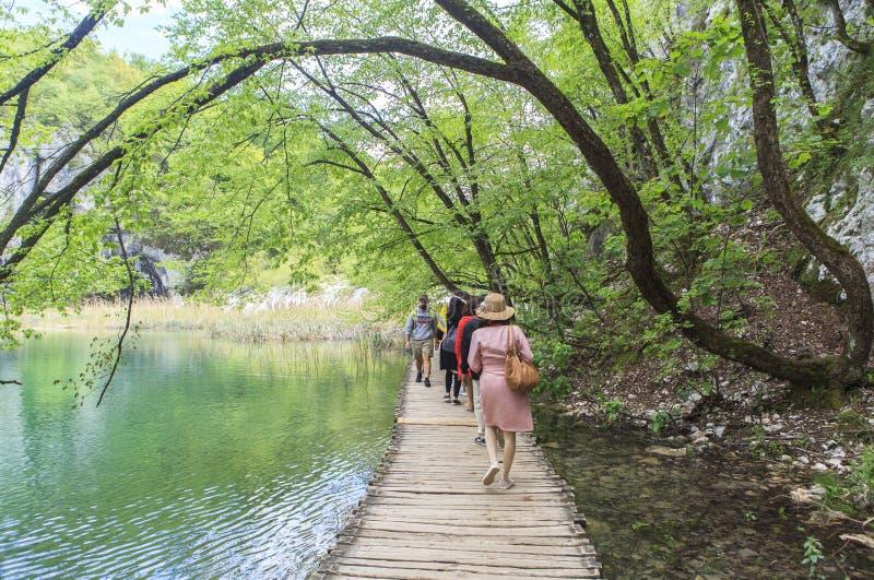 Природа национального парка озер Plitvice летом стоковое изображение rf