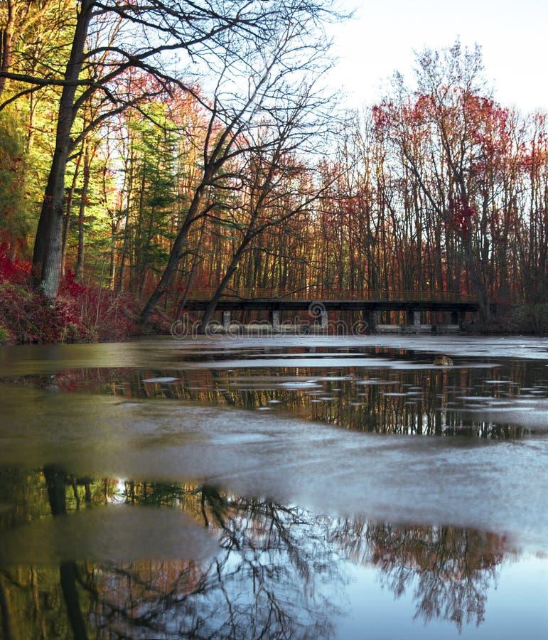 Природа на озере в Белграде стоковое фото rf