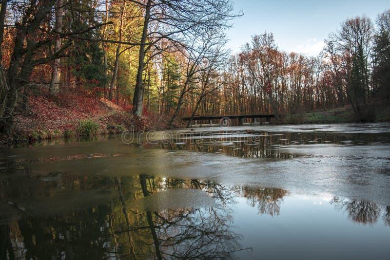 Природа на озере в Белграде стоковые изображения