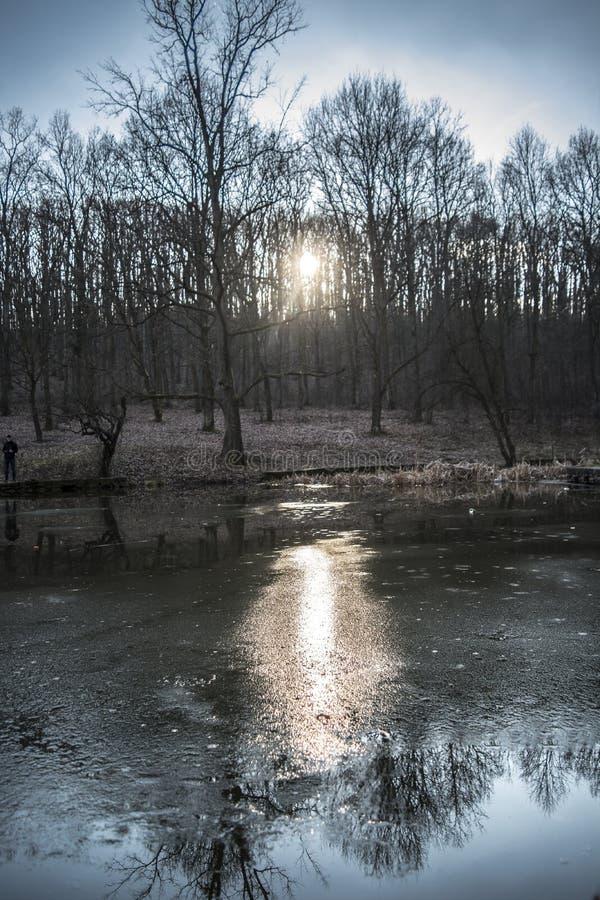Природа на озере в Белграде стоковые изображения rf
