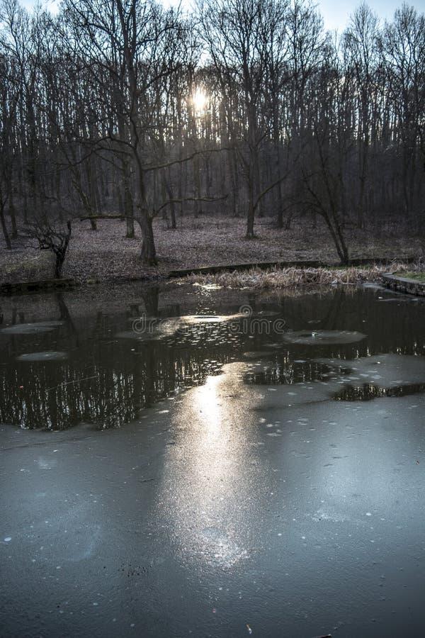 Природа на озере в Белграде стоковые фотографии rf