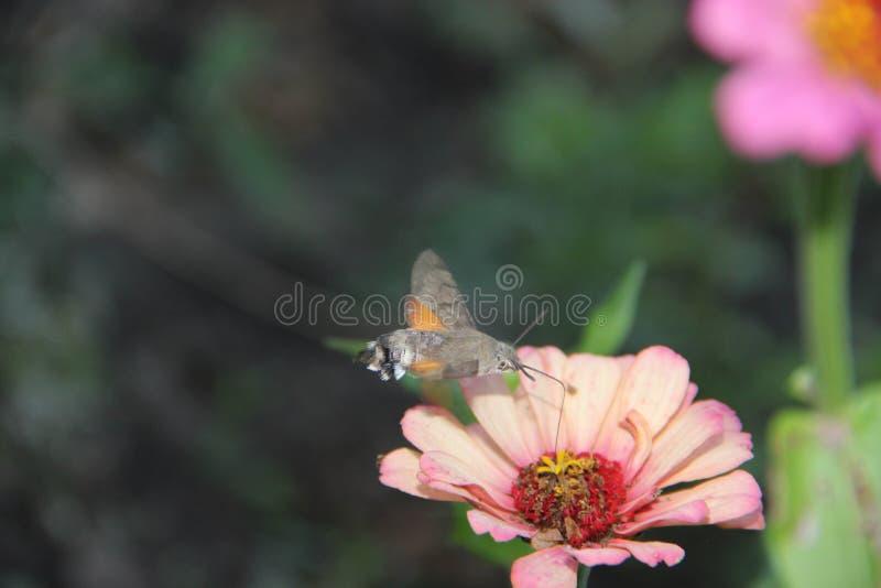 Природа нектара цветка цикады стоковые изображения