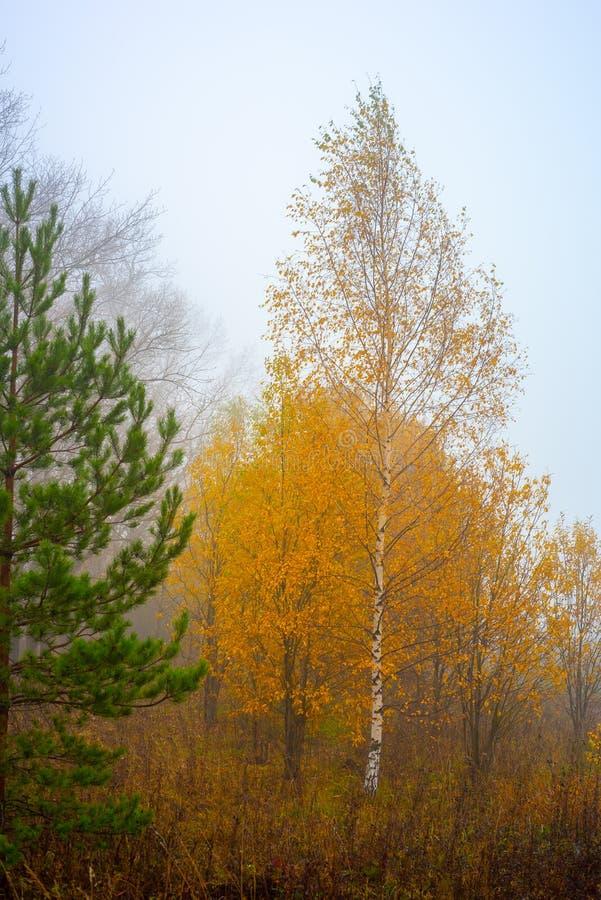 Природа области Москвы Лес осени в тумане 2018 троица st sergius sergiev России posad скита environment стоковые фото