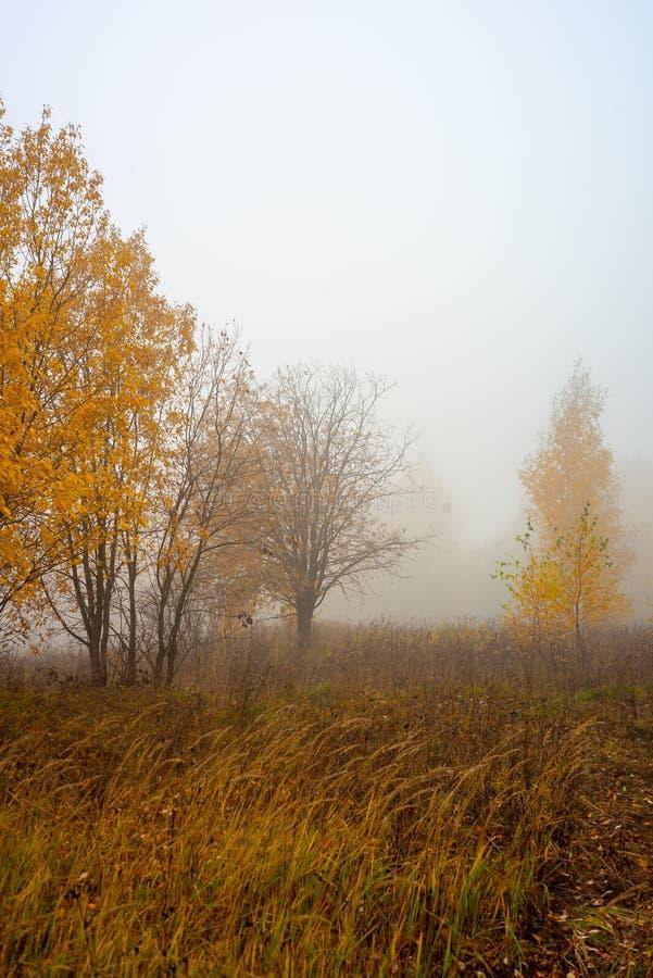 Природа области Москвы Лес осени в тумане 2018 троица st sergius sergiev России posad скита environment стоковое фото rf