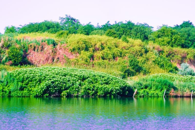 природа озера стоковые изображения rf