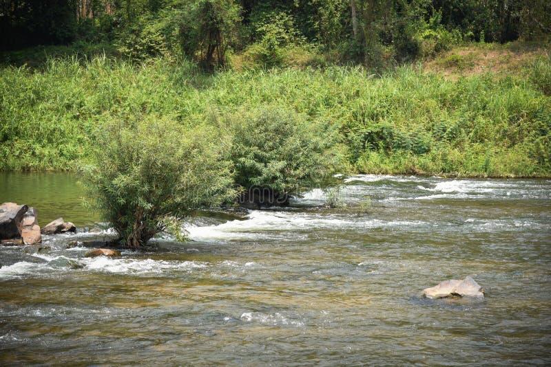 Природа реки в Таиланде стоковые фотографии rf