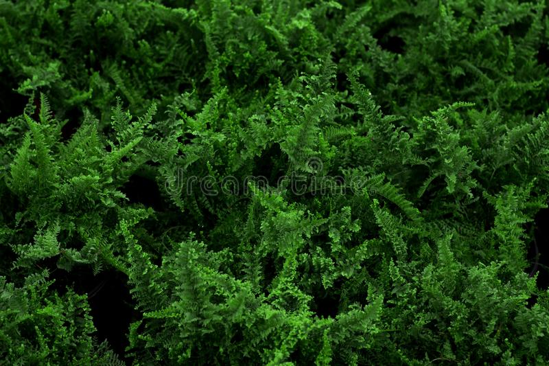 Природа сада заводов зеленая стоковая фотография rf