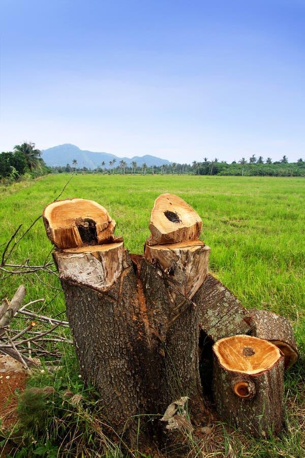 природа сохраняет стоковые фото