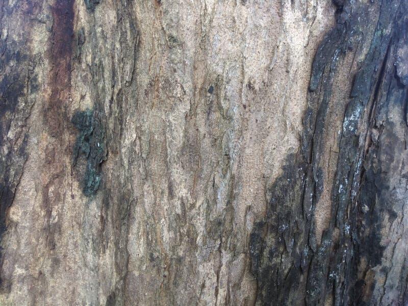 Природа Старая деревянная текстура, старый конец дерева вверх по съемке стоковые изображения