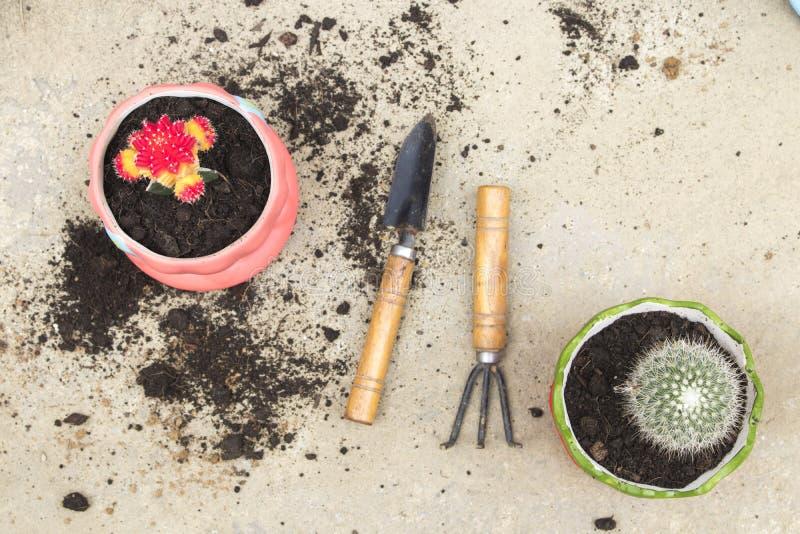 Природа текстуры предпосылки растет кактус в цветочном горшке с лопатой, почвой на цементе стоковое фото rf