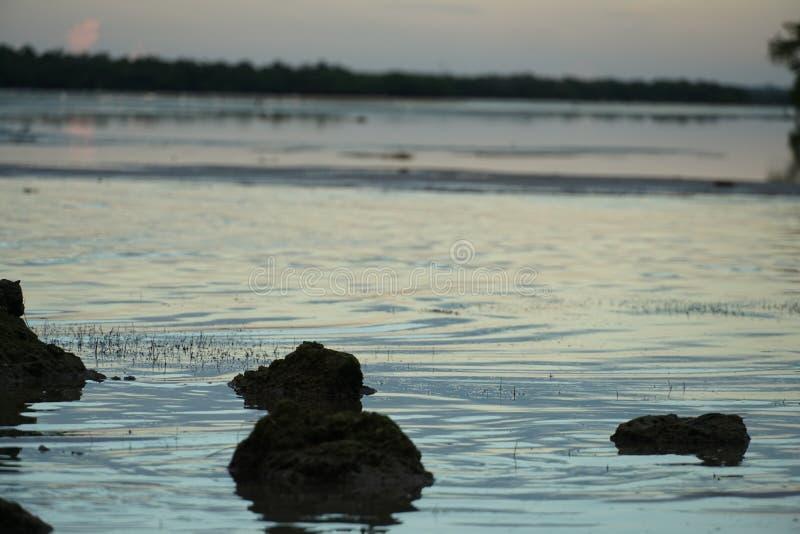 Природа Флориды самая точная стоковое изображение rf