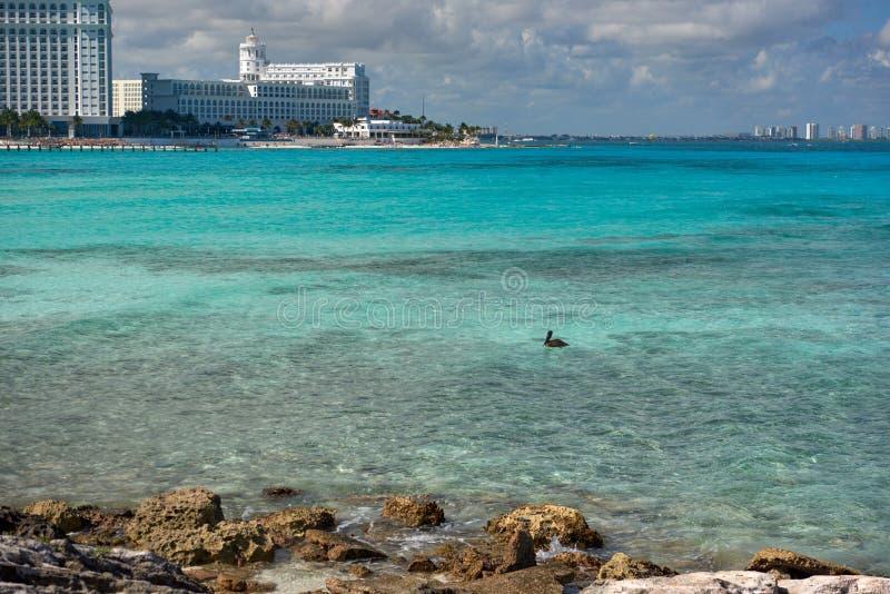 Природа, цапля и лето рая на тропическом пляже стоковое изображение rf
