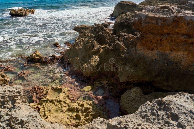 Природа, цапля и лето рая на тропическом пляже стоковые изображения rf
