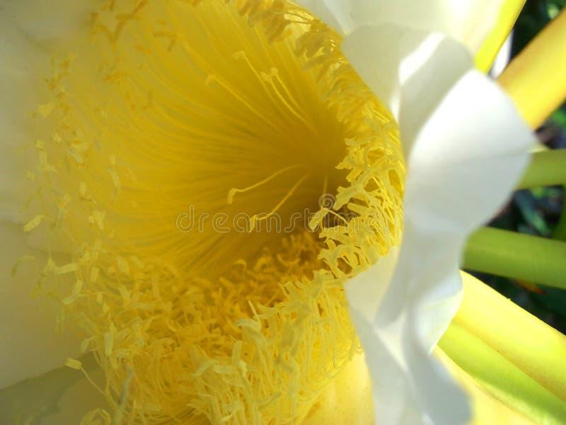 Природа, цветки, красивые, ослабляет, сезон дождей стоковые фото