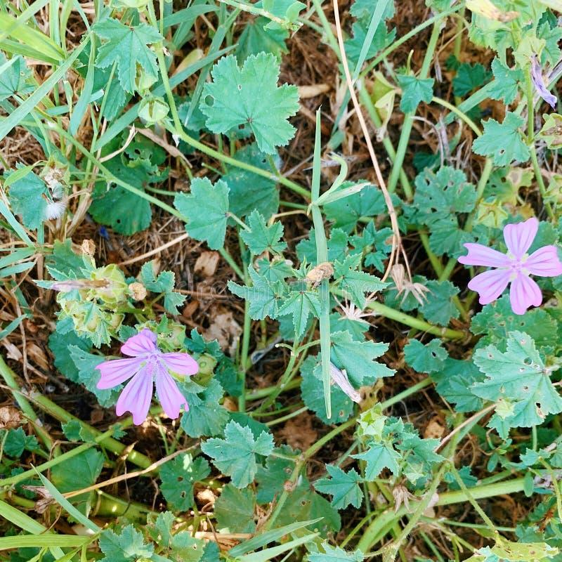 Природа & цветки стоковая фотография