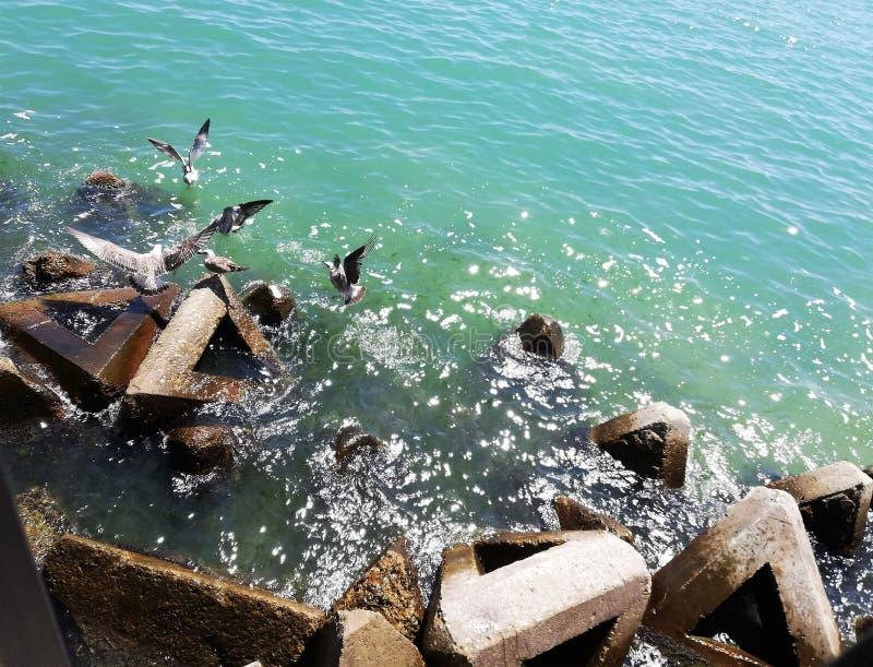 Природа/Чёрное море/Balchik/чайки стоковое изображение