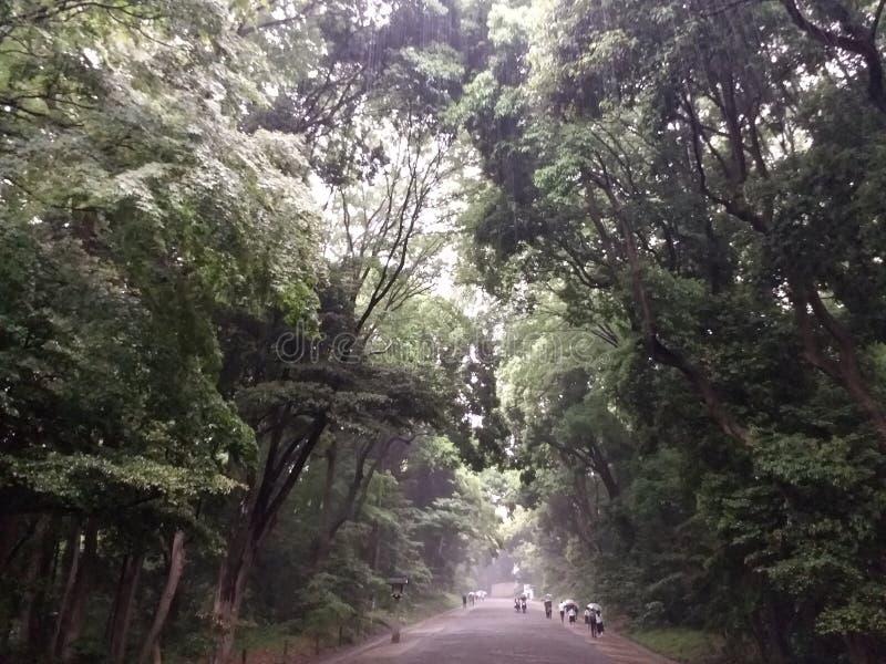 Природа Япония стоковое изображение rf