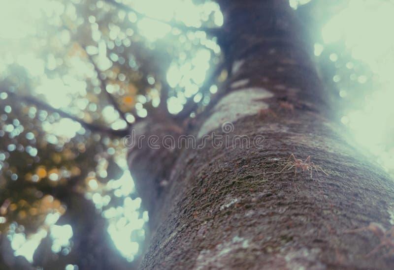 Природа стоковая фотография
