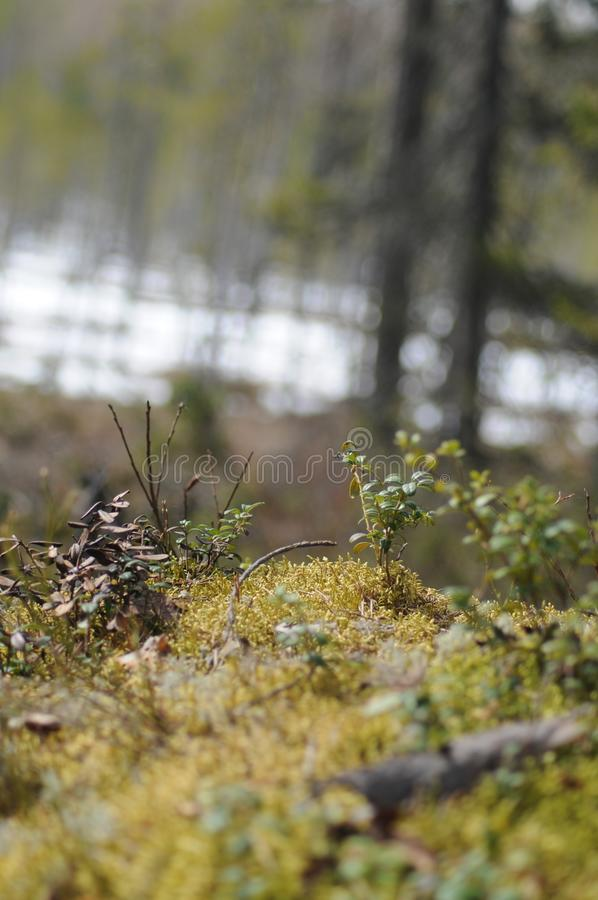 Природа стоковое фото