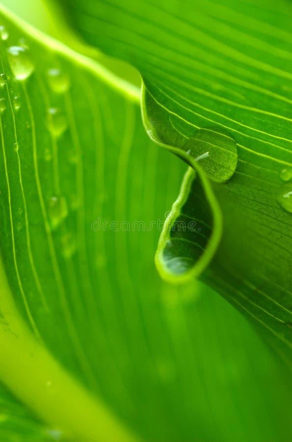 природа s утра росы круга стоковые фотографии rf