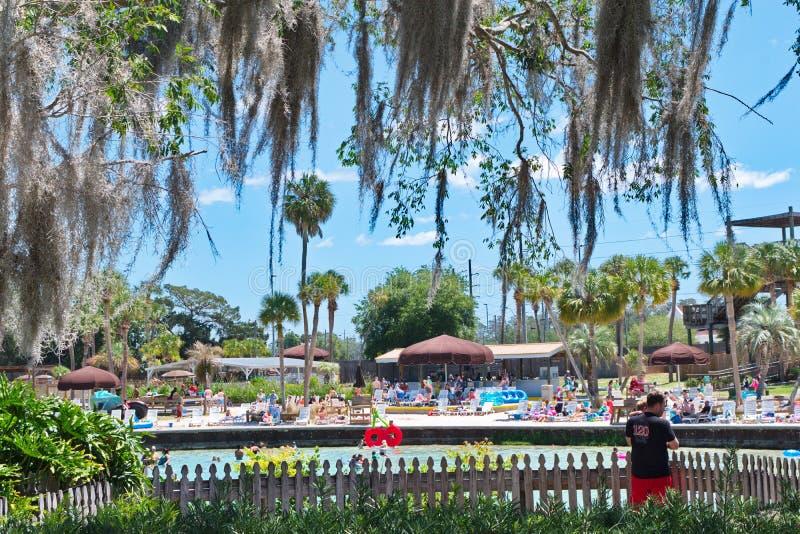 Природные источники плавая Weeki Wachee, Флорида стоковые фото