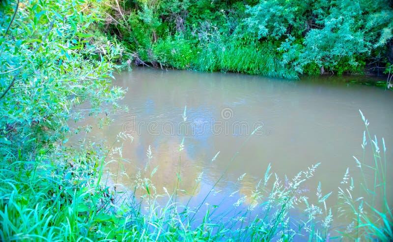 Природные парки области Москвы, озеро в труднопроходимом лесе, непроходные передние части стоковые изображения rf