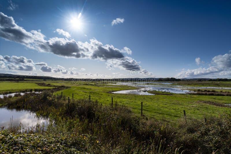 Природный заповедник Ветландов в сельской местности под сильным солнечным светом стоковая фотография
