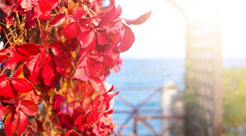 Природный парк листвы завода осени знамени красный на ландшафта осени пляжа фокусе красивого выборочном стоковое изображение rf