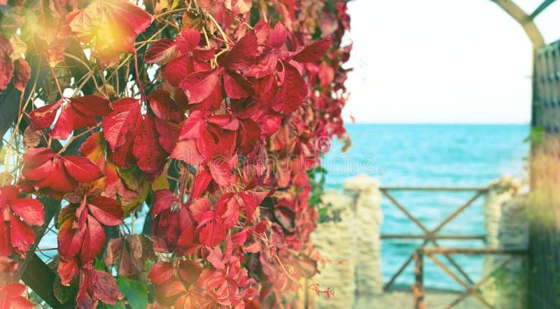Природный парк листвы завода осени знамени красный на ландшафта осени пляжа фокусе красивого выборочном стоковая фотография