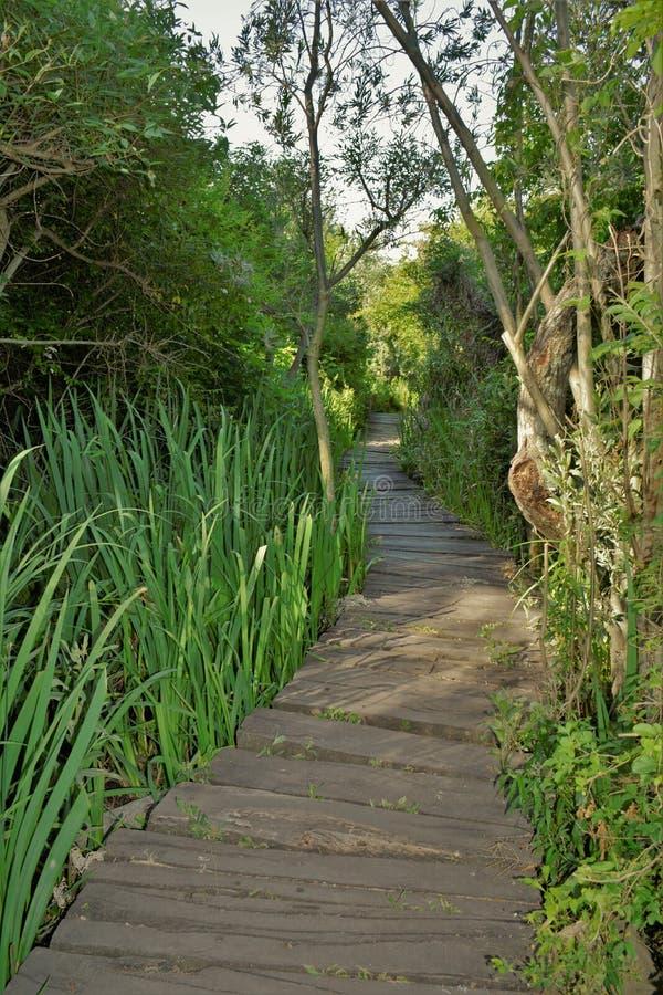 природный пейзаж природный ландшафт деревянные тропинки ботанический охранный парк в буэнос-айресе стоковое фото rf