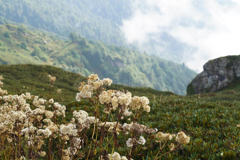 Природа абхазии стоковая фотография rf