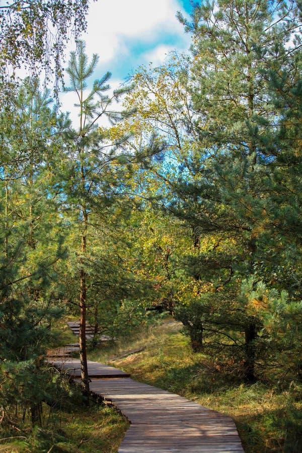 Download Природа вертела Curonian стоковое изображение. изображение насчитывающей листво - 40579115