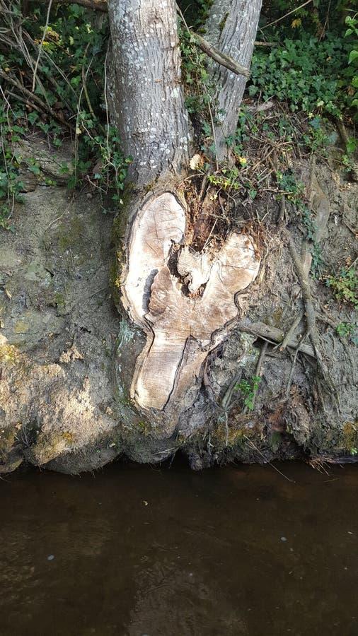 Природа в горах pyrinees стоковые изображения rf