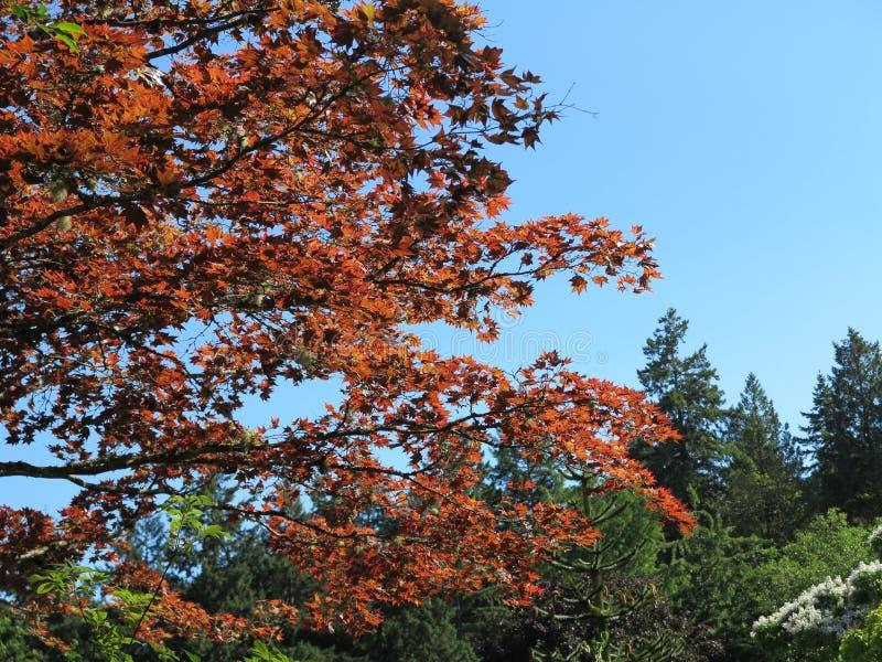 Природа в коричневом цвете и зеленом цвете стоковое фото rf