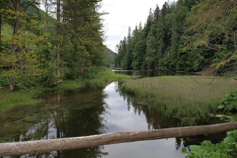 Природа в национальном парке в Словакии стоковые фото