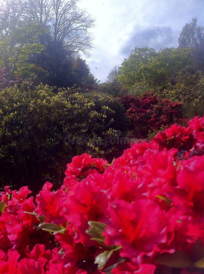 Природа в парке стоковая фотография rf