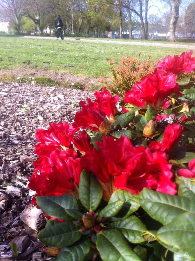 Природа в парке стоковое изображение rf
