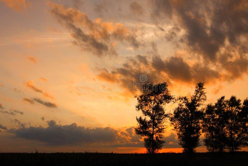 Природа деревьев стоковая фотография