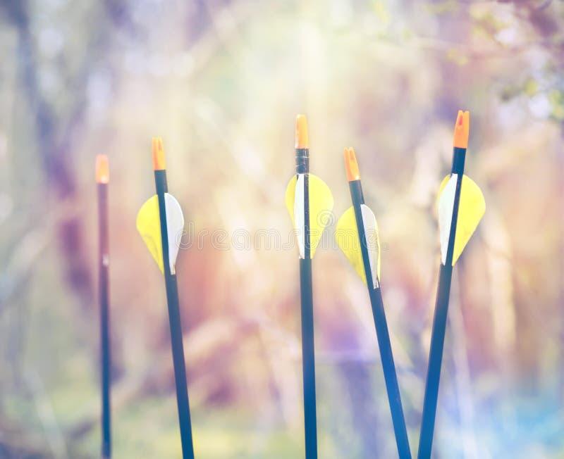 Природа лета концепции archery спорта стрелок смычка стоковая фотография rf