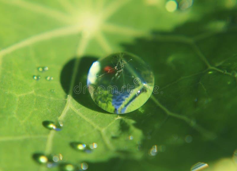 Природа и вода, зеленые лист с каплей росы, совсем естественной стоковая фотография rf