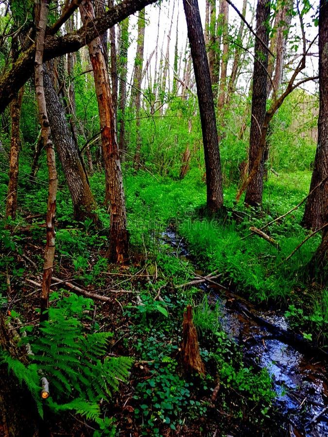 Природа на своем ринве самой точной заводи идя лес стоковое фото