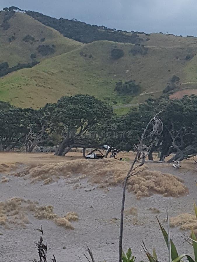 Природа Новой Зеландии стоковые изображения rf