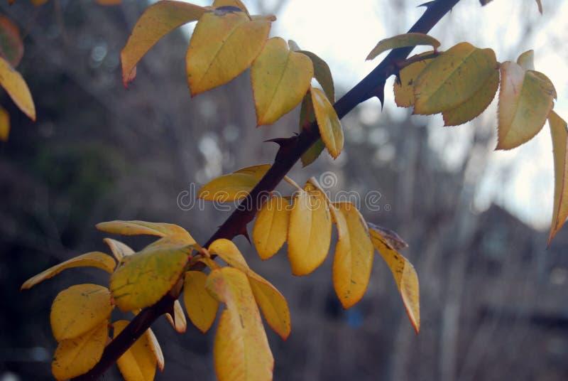 природа осени голубая длинняя затеняет небо стоковое изображение